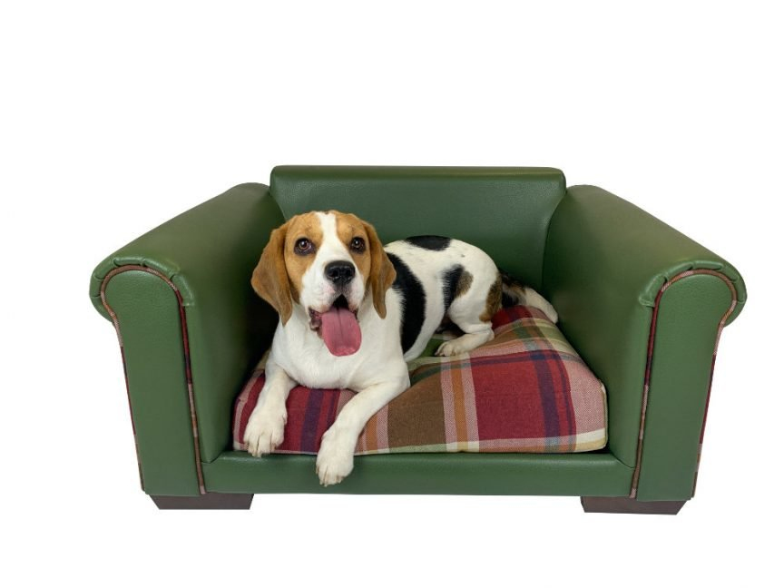 Barra Dog Bed With Dog