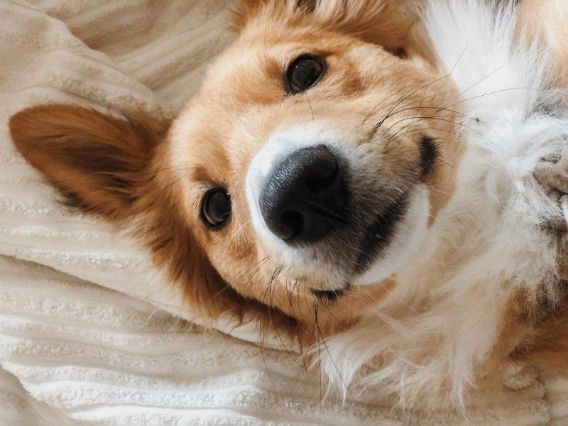 Dog looking into camera